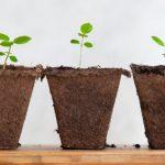 3 rastliny, ktoré pomôžu k zdravšiemu vzduchu v domácnosti